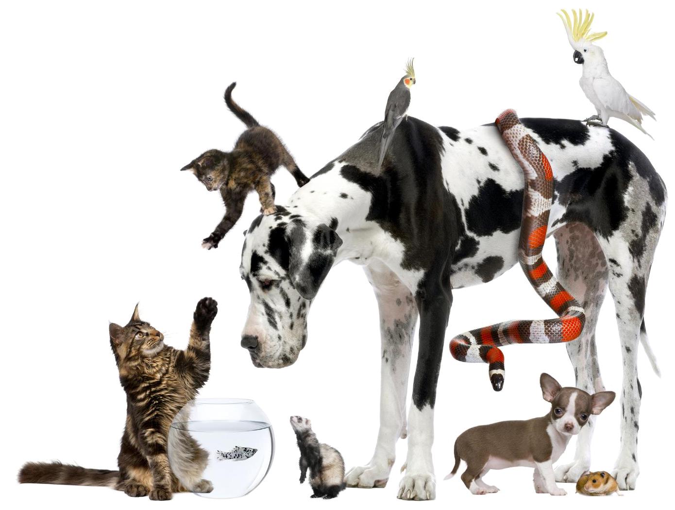 group pet